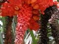Mooie flora in het Refugio Nacional de Fauna Silvestre, in de heuvels achter Golfito