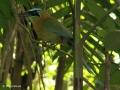 Mooi vogeltje in Jardín Botanico Wilson in Las Cruces