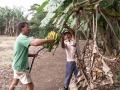 Gastheer Kees plukt bananen van eigen bodem bij Monte Terras B&B