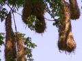 Nestzakken op het schiereiland voor Monte Terras B&B in Tronadora