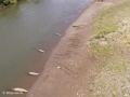 ...om de krokodillen daaronder te zien