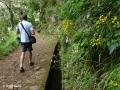 Ribeiro Frio: langs de Levada do Furado op weg naar het uitkijkpunt Balcões