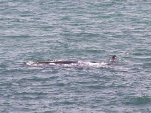 Onze meest spectaculaire foto van een walvis.