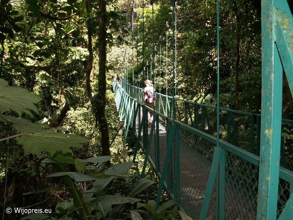 Een van de vele hangbruggen in het nevelwoud van Monteverde