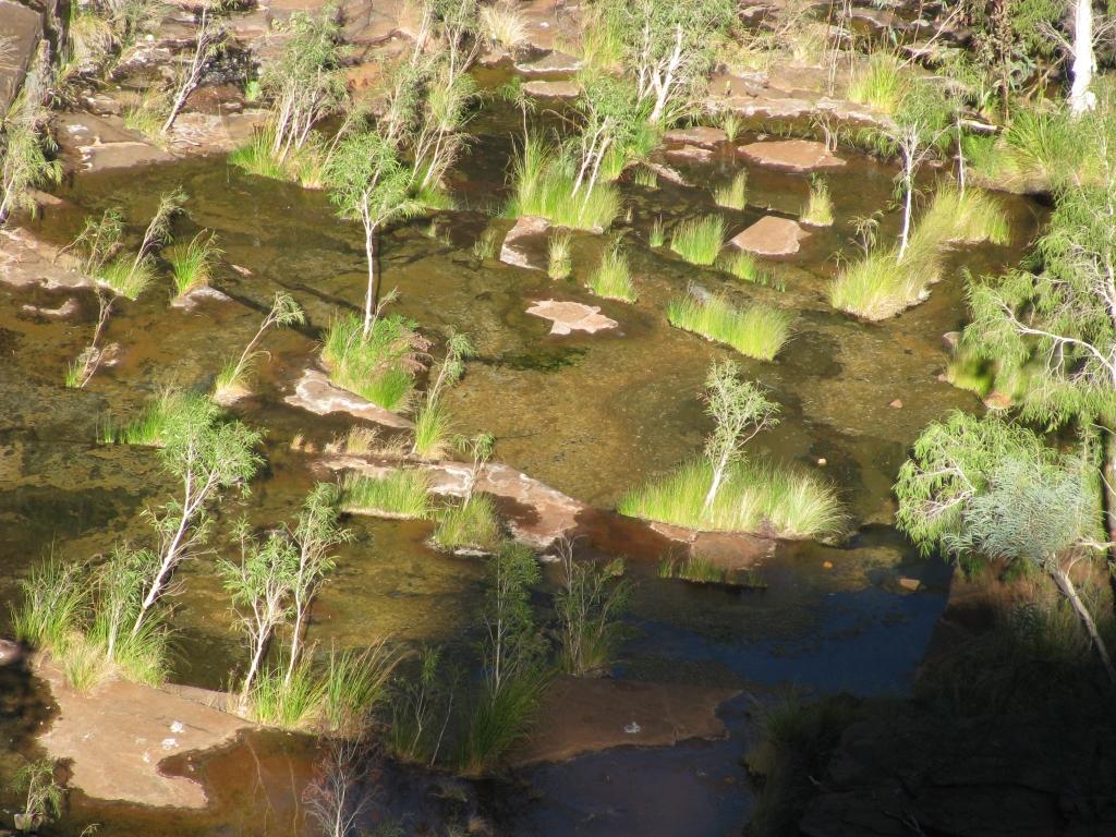 Karijini NP - Weelderige begroeing op de bodem van de kloof