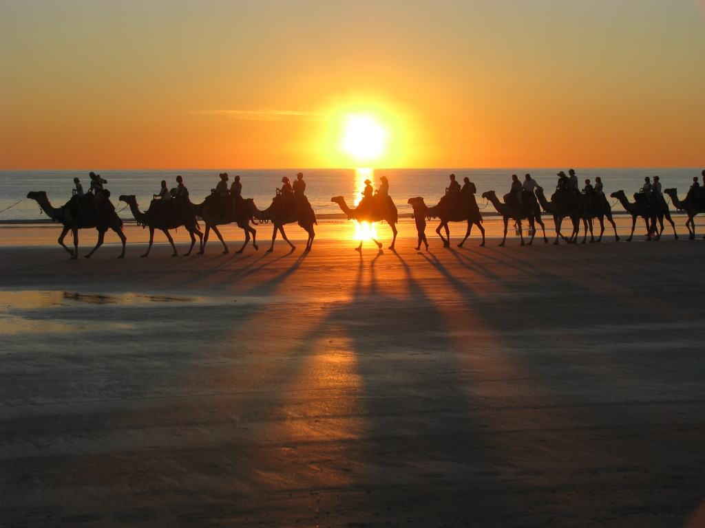 Camels on Cable Beach.