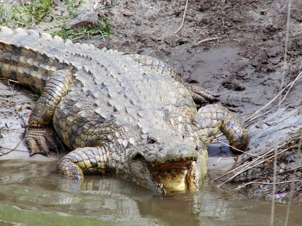 Een toeristendorp tussen de krokodillen