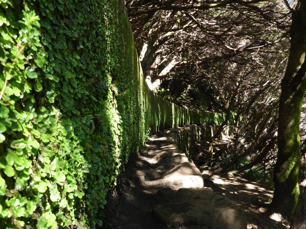Met rotsplantjes begroeide levadamuur versterkt het sprookjeseffect