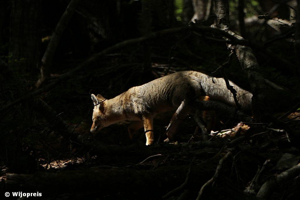 In de bossen van Valle de Lobos....
