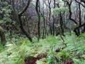 Regenwoud in het Anaga-gebergte