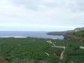 Overal bananen in noordelijk Tenerife vlakbij Garachico