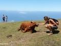 Rabaçal: koeien op de hoogvlakte Paul da Serra