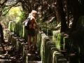 Rabaçal: door een tunnel van overhangende bomen naar de 25 Fontes
