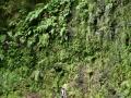 Ribeira da Janela: met varens begroeide bergwanden langs de wandelroute