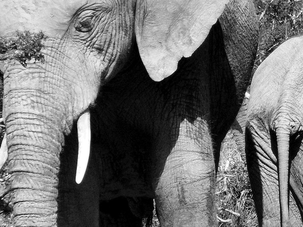 Een bijzondere ontmoeting met de koning van Addo Elephant NP zal ons nog lang bijblijven.