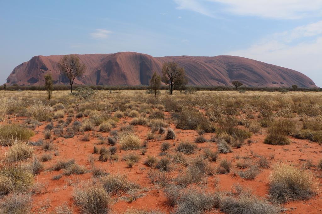 In een woestijnachtige landschap van rood zand, rode zandduinen, geel spinifex gras en grijsgroene bossages staat icoon Uluru, ook wel Ayers Rock genoemd.